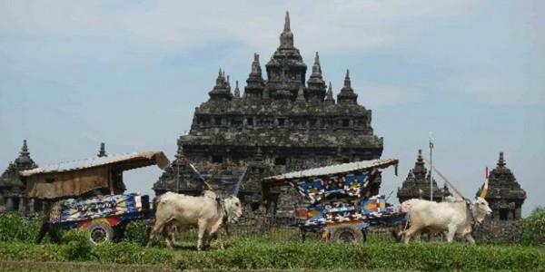 wisata desa naik gerobak sapi di sekitar cndi prambanan