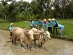 membajak sawah kegiatan wisata pedesaan