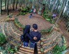 hutan-pinus-mangunan-yogyakarta