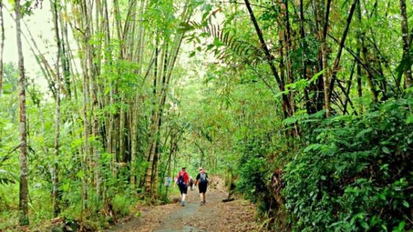 heritage-walk-passing-bamboo-forest