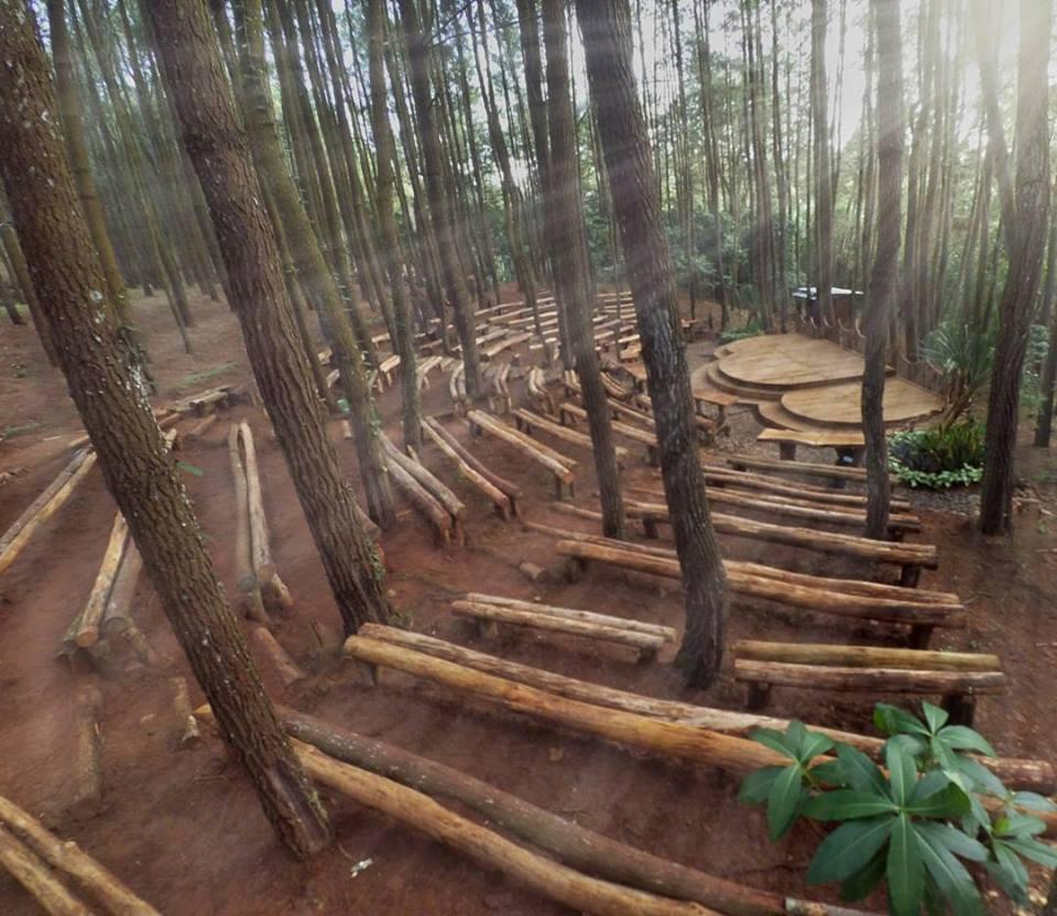 Hasil gambar untuk hutan pinus